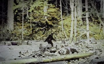 10 Most Famous Bigfoot Sightings Captured on Film in the Last 50 Years
