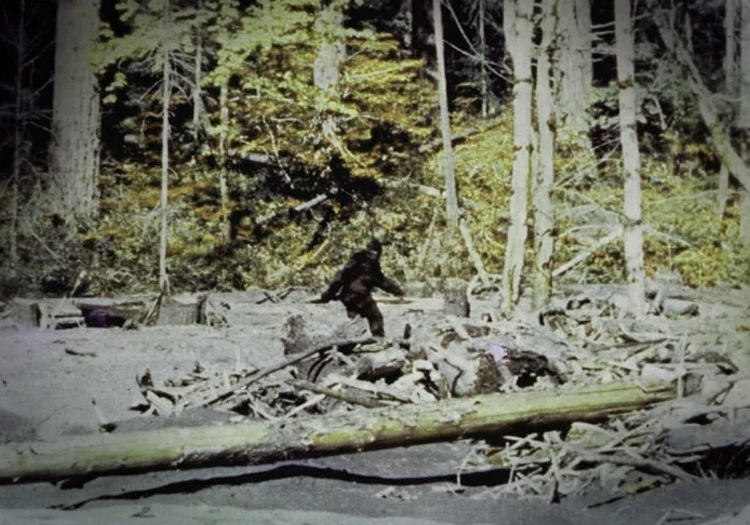 10 famous bigfoot sightings captured on film in the last 50 years